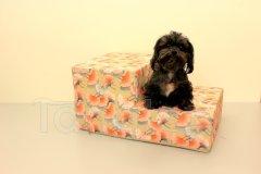 Schody pro psa Oranžové květy Schody pro psy