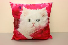 Fotopolštář bílé koťátko v růžové Fotopolštář zvíře