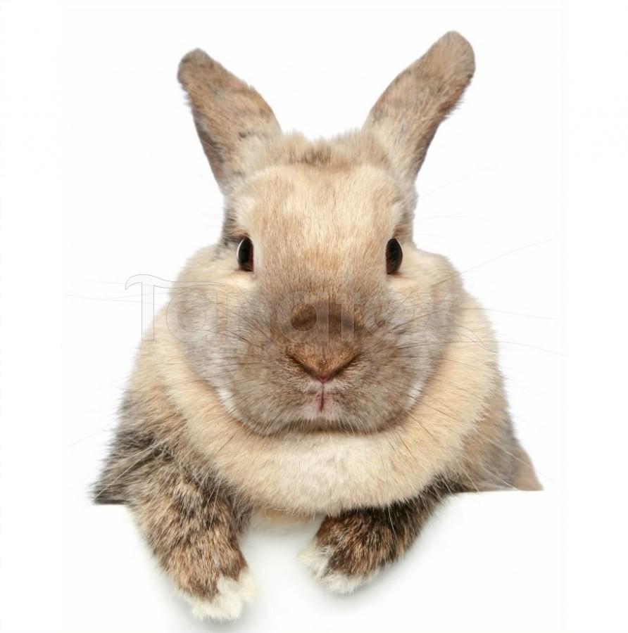 Fotopolštář béžový králíček na bílém